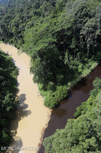 Blackwater river meeting a muddy river in Borneo