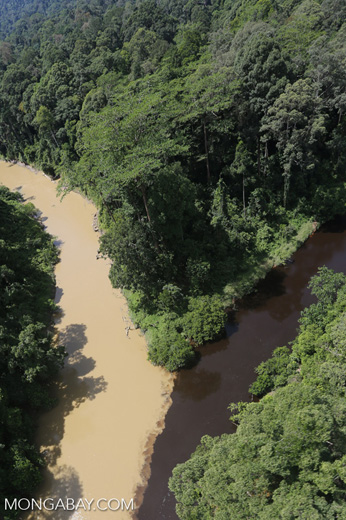 River from healthy forest area meeting river downstream from logging -- sabah_aerial_1517
