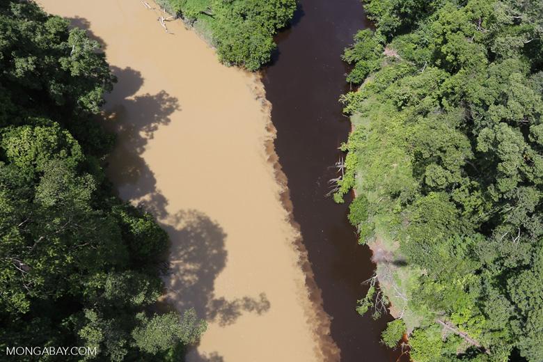 Sedimentation of a river in Borneo due to logging -- sabah_aerial_1520
