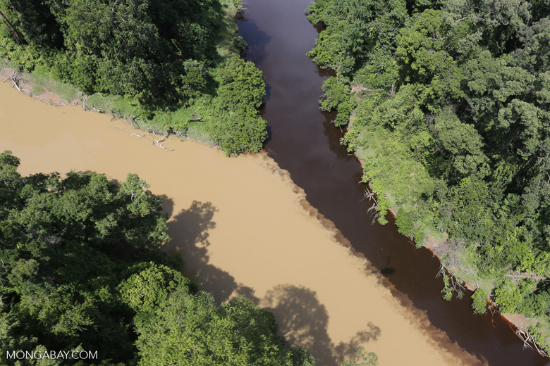 Blackwater river meeting a muddy river in Borneo -- sabah_aerial_1526