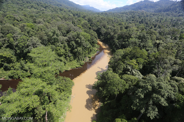 The impact of logging seen on a rainforest river in Borneo -- sabah_aerial_1539