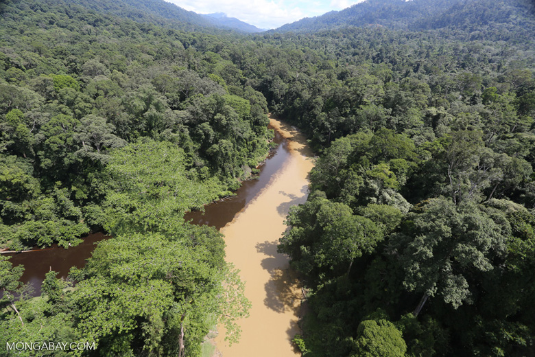 Sedimentation of a river in Borneo due to logging -- sabah_aerial_1540