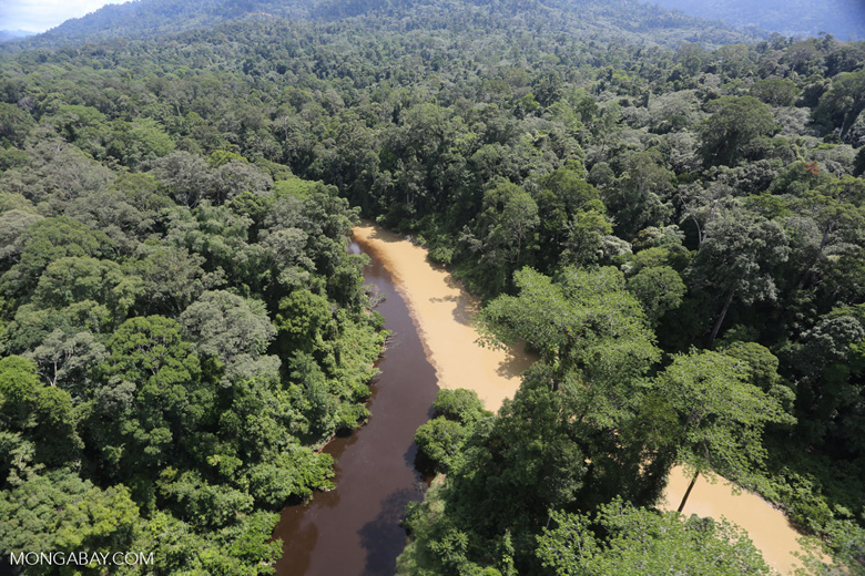 Muddy river and blackwater river converge in Borneo -- sabah_aerial_1543