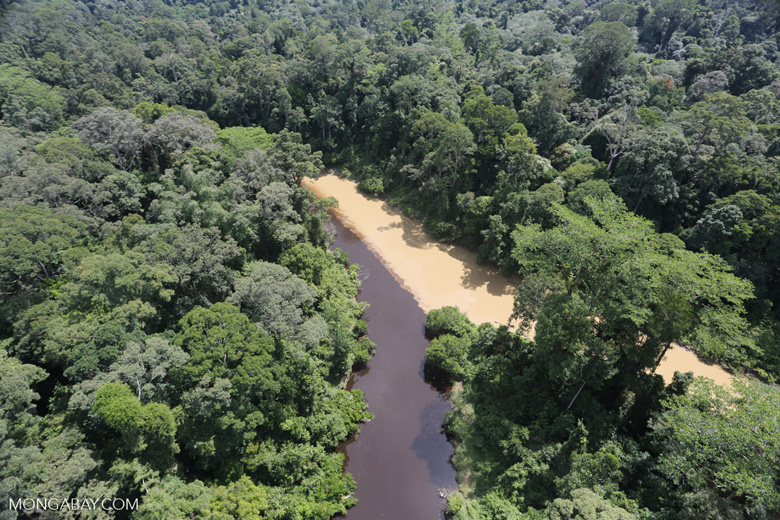 River muddied by upstream deforestation -- sabah_aerial_1548