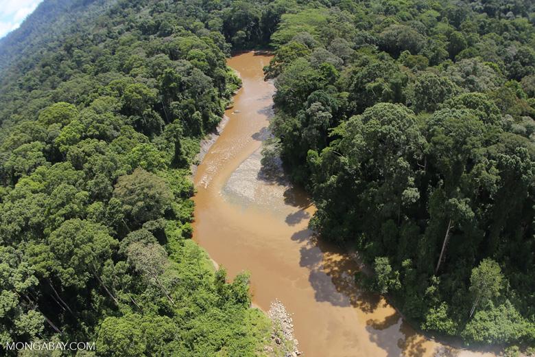River in Borneo -- sabah_aerial_1557