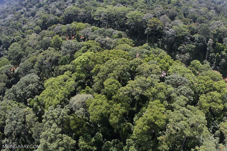Borneo rainforest -- sabah_aerial_1562