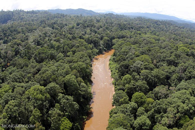 River in Borneo