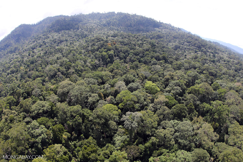 River in Borneo -- sabah_aerial_1576