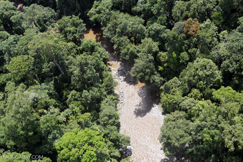River in Borneo -- sabah_aerial_1586