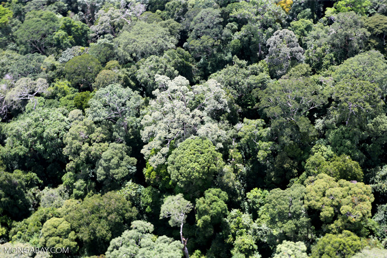 Borneo rainforest -- sabah_aerial_1590
