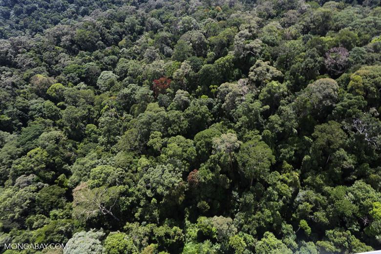 Borneo rainforest -- sabah_aerial_1599