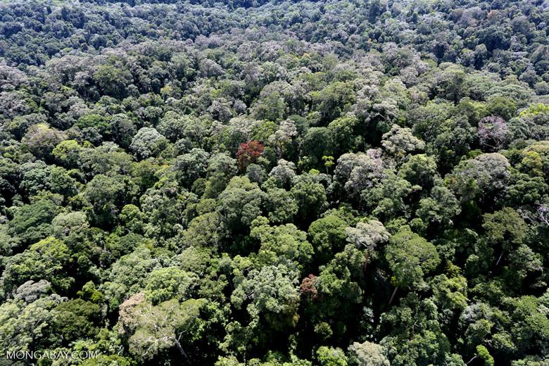 Borneo rainforest -- sabah_aerial_1601