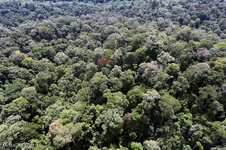 Borneo rainforest -- sabah_aerial_1602