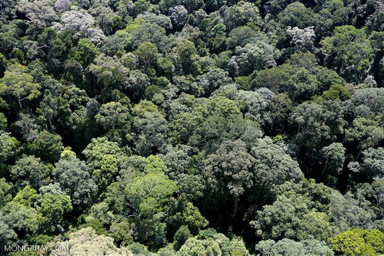 Borneo rainforest -- sabah_aerial_1607