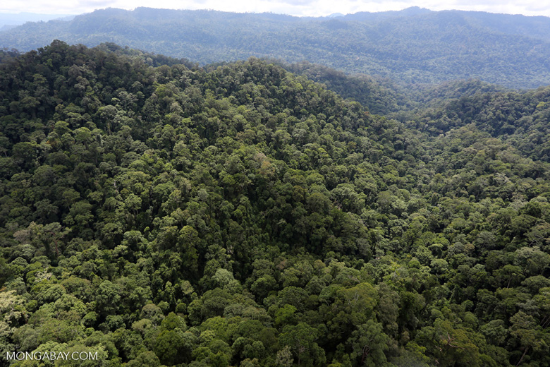 Borneo rainforest -- sabah_aerial_1617
