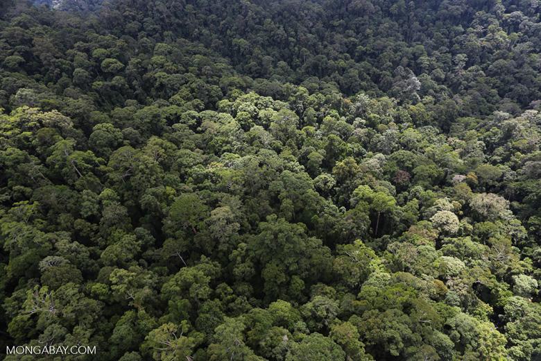 Borneo rainforest -- sabah_aerial_1621