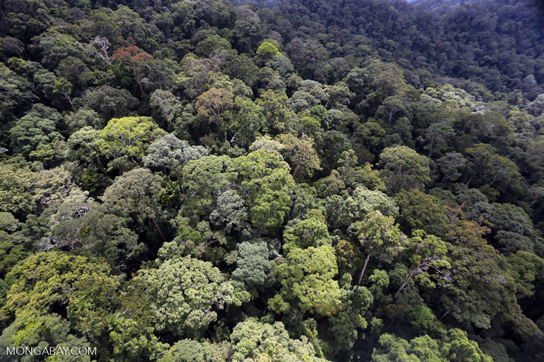 Borneo rainforest -- sabah_aerial_1624