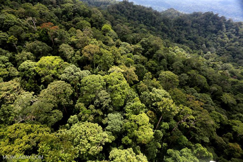 Borneo rainforest -- sabah_aerial_1626