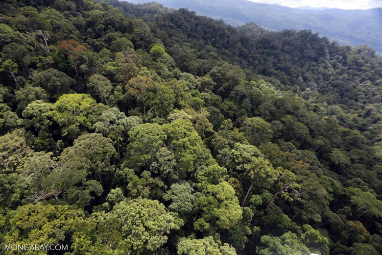 Borneo rainforest -- sabah_aerial_1627