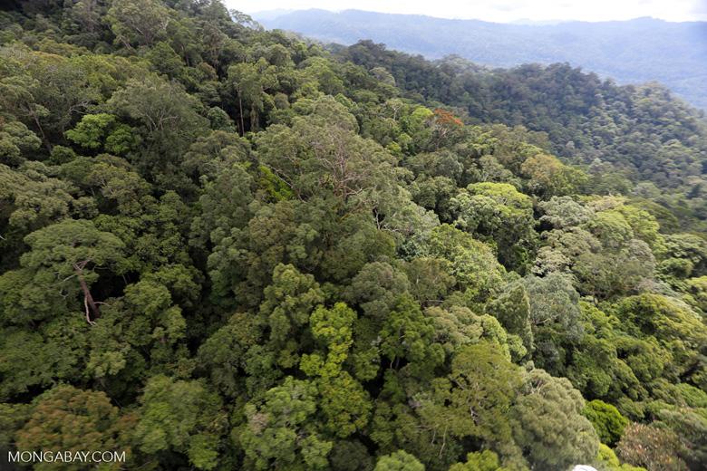Borneo rainforest -- sabah_aerial_1631
