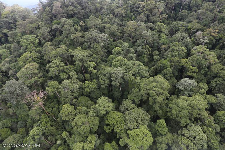 Borneo rainforest -- sabah_aerial_1641