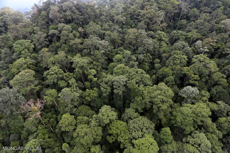 Borneo rainforest -- sabah_aerial_1642