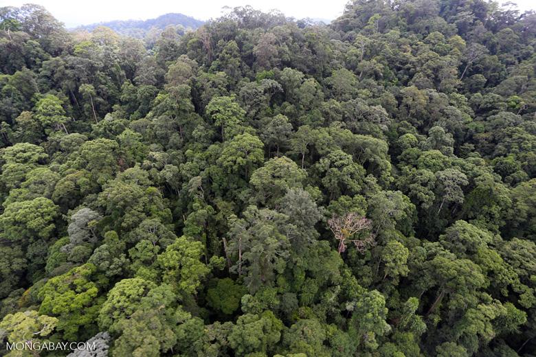 Borneo rainforest -- sabah_aerial_1649