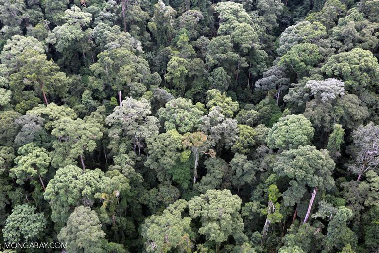 Borneo rainforest -- sabah_aerial_1651