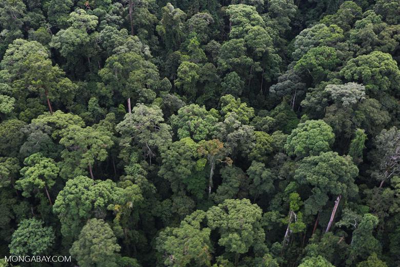 Borneo rainforest -- sabah_aerial_1652