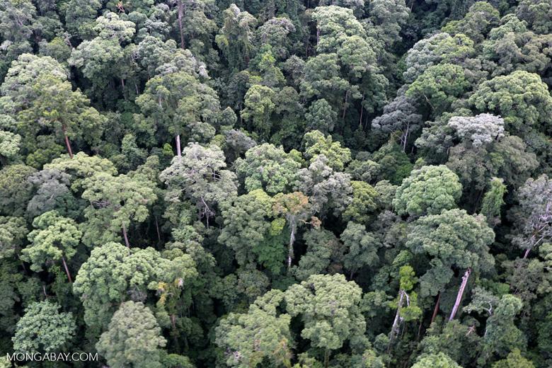 Borneo rainforest -- sabah_aerial_1653