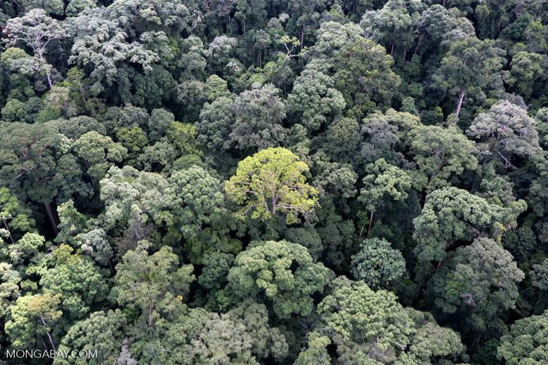 Borneo rainforest -- sabah_aerial_1661