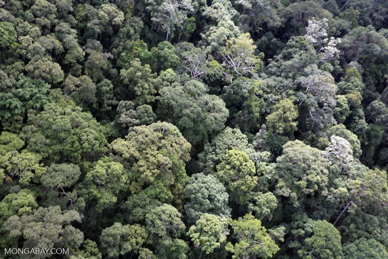 Borneo rainforest -- sabah_aerial_1666
