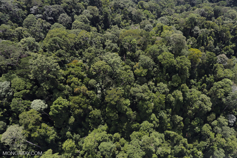 Borneo rainforest -- sabah_aerial_1677