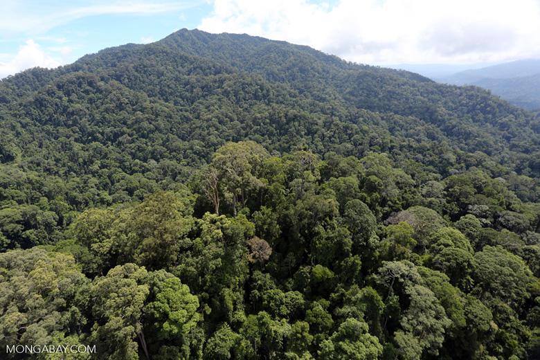 Borneo rainforest -- sabah_aerial_1680