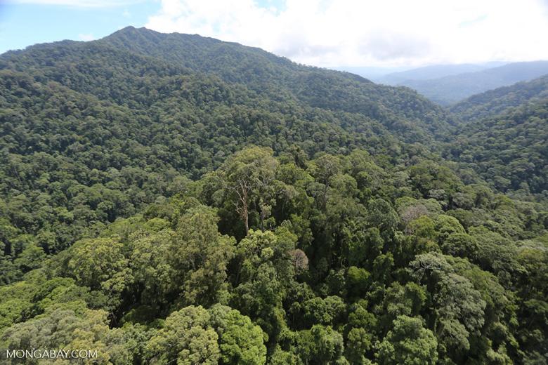 Borneo rainforest -- sabah_aerial_1682