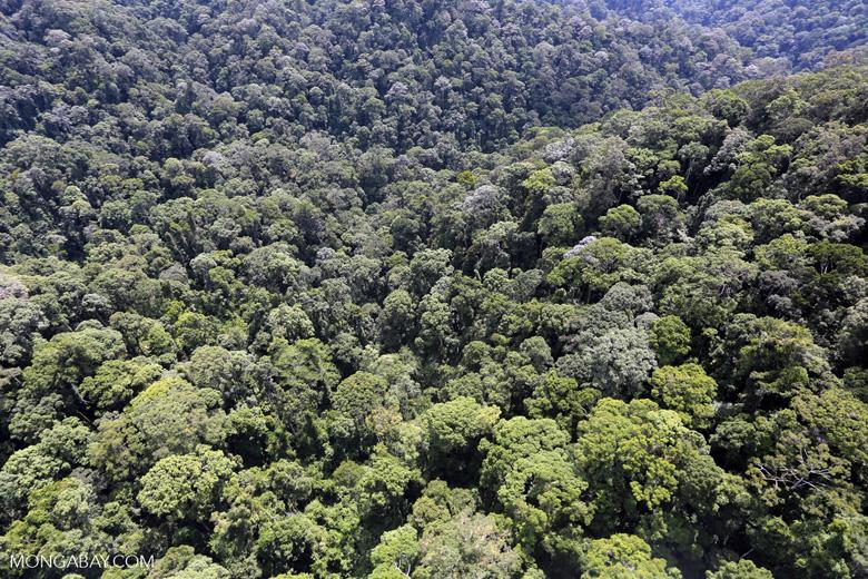 Borneo rainforest -- sabah_aerial_1688