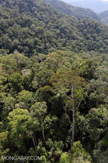 Borneo rainforest -- sabah_aerial_1698