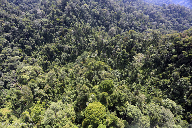Selectively logged forest in Borneo -- sabah_aerial_1700