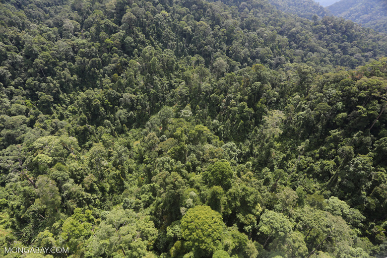 Selectively logged forest in Borneo -- sabah_aerial_1701