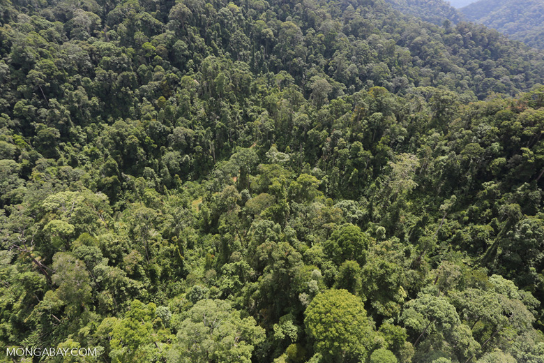 Selectively logged forest in Borneo -- sabah_aerial_1702