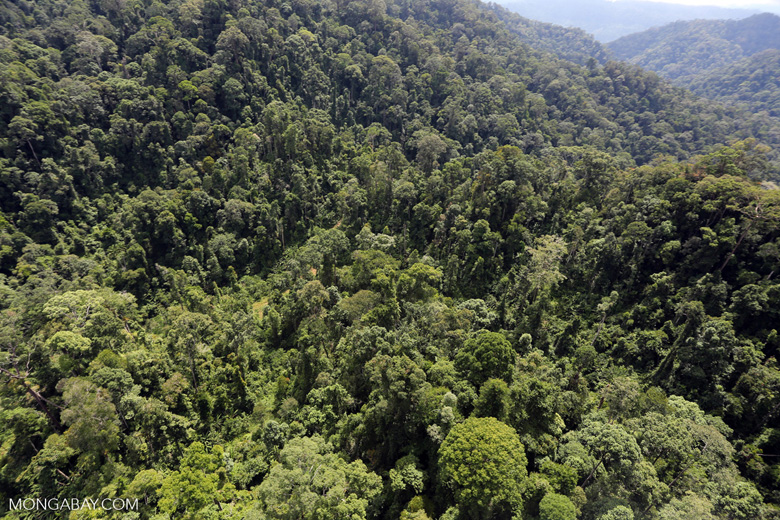Selectively logged forest in Borneo -- sabah_aerial_1703