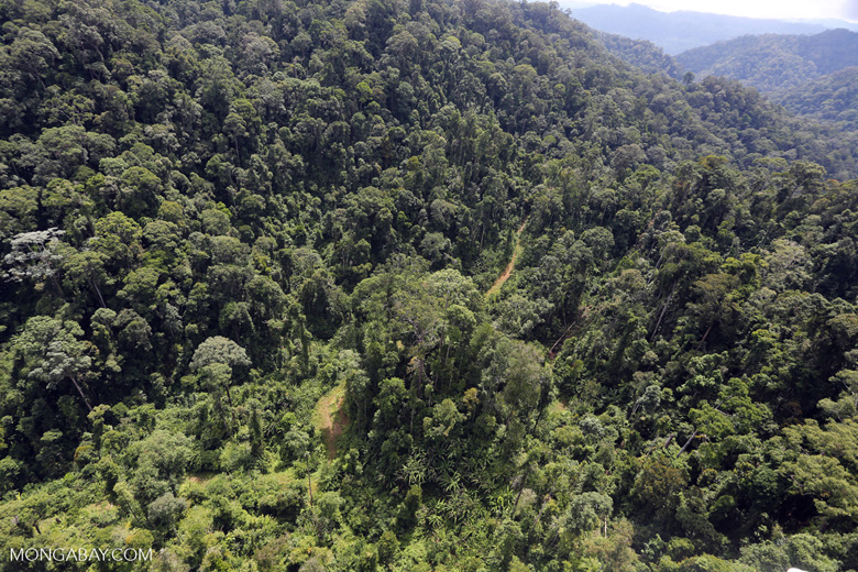 Selectively logged forest in Borneo -- sabah_aerial_1706
