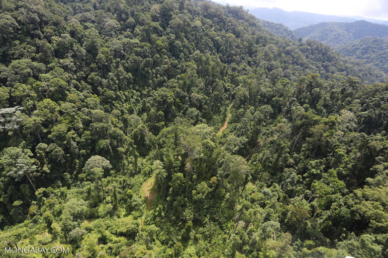 Selectively logged forest in Borneo -- sabah_aerial_1707