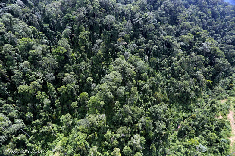 Selectively logged forest in Borneo -- sabah_aerial_1711