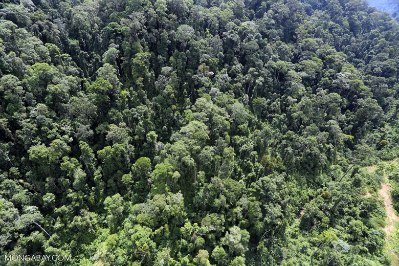 Selectively logged forest in Borneo -- sabah_aerial_1712