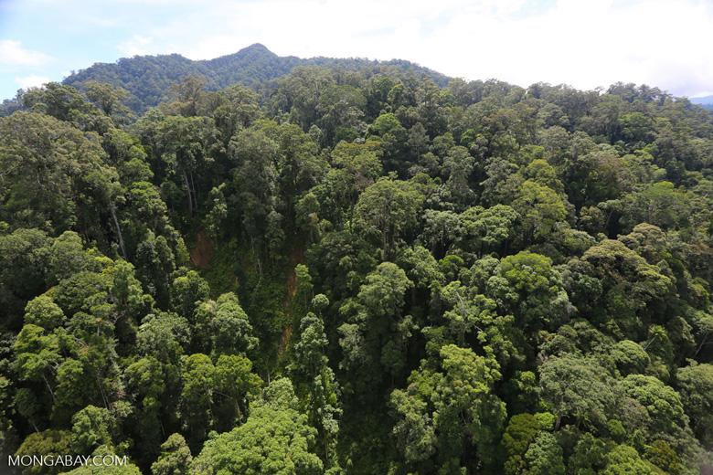 Borneo rainforest -- sabah_aerial_1716