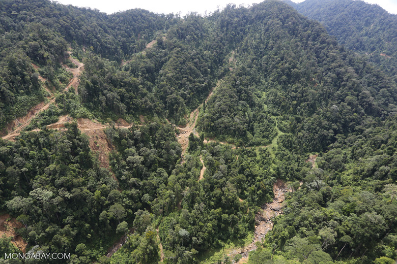 Industrially logged rainforest in Borneo -- sabah_aerial_1726
