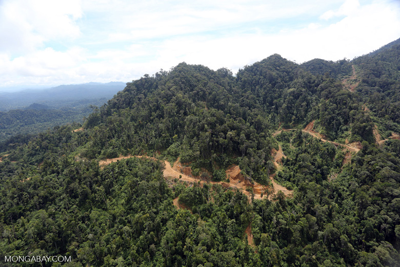 Industrial logging in Borneo -- sabah_aerial_1728