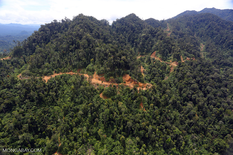 Industrial timber harvesting in Borneo -- sabah_aerial_1731