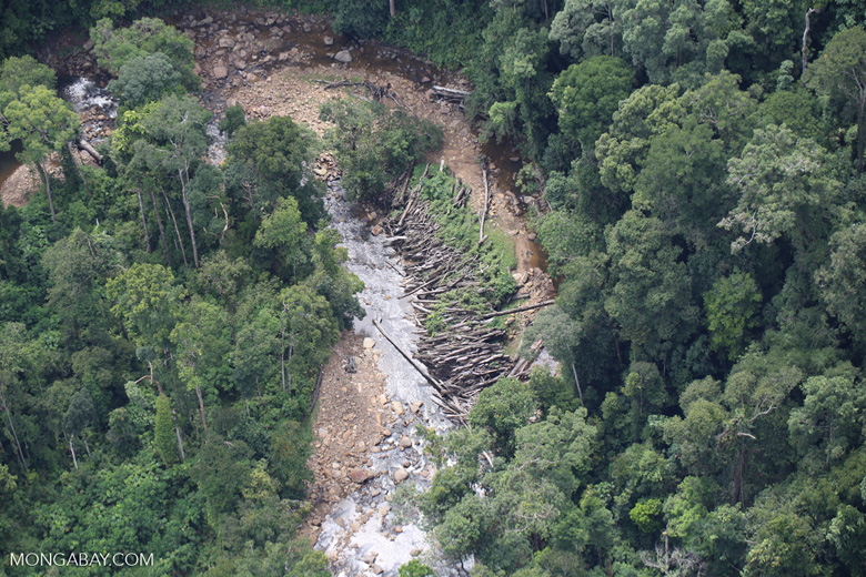 Logs in a river bed in Borneo -- sabah_aerial_1735